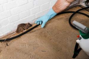 wildlife removal columbia sc
