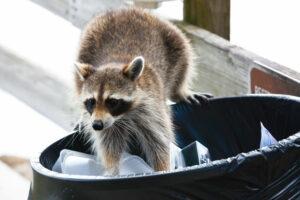 Wildlife Removal Columbia SC